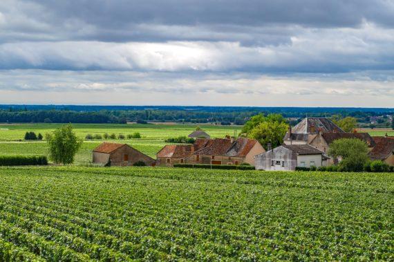 Visite guidée de la route des Vins de Bourgogne pour découvrir les caves et les vignobles et rencontrer les vignerons lors de dégustations